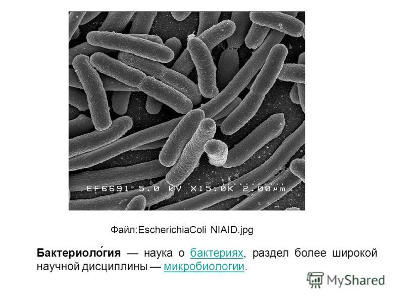Бактериоло́гия наука о бактериях, раздел более широкой научной дисциплины микробиологии.бактерияхмикробиологии Файл:EscherichiaColi NIAID.jpg