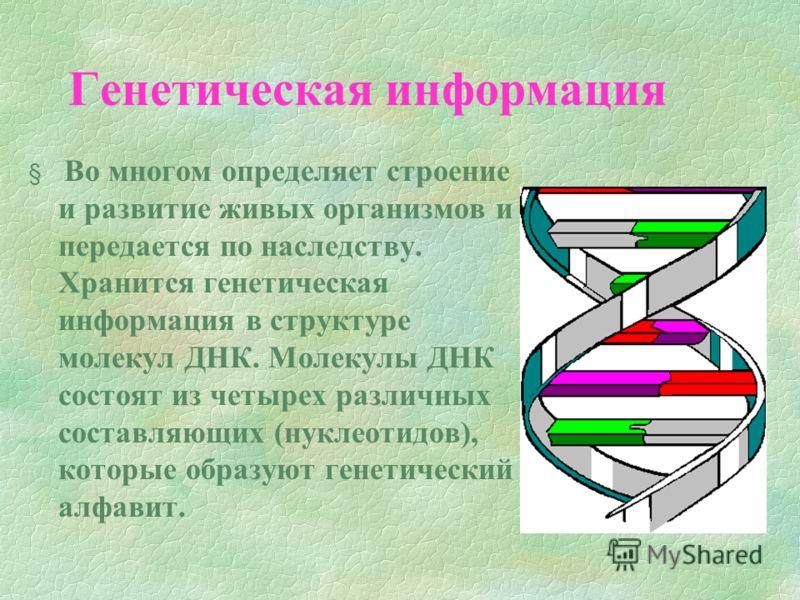 Генетическая информация § Во многом определяет строение и развитие живых организмов и передается по наследству. Хранится генетическая информация в структуре молекул ДНК. Молекулы ДНК состоят из четырех различных составляющих (нуклеотидов), которые об