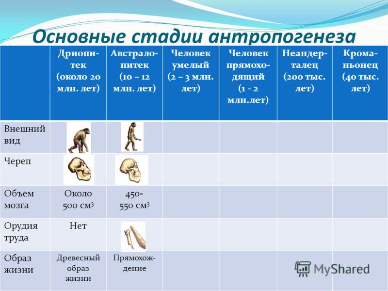 Основные стадии антропогенеза Дриопи- тек (около 20 млн. лет) Австрало- питек (10 – 12 млн. лет) Человек умелый (2 – 3 млн. лет) Человек прямохо- дящий (1 - 2 млн.лет) Неандер- талец (200 тыс. лет) Крома- ньонец (40 тыс. лет) Внешний вид Череп Объем