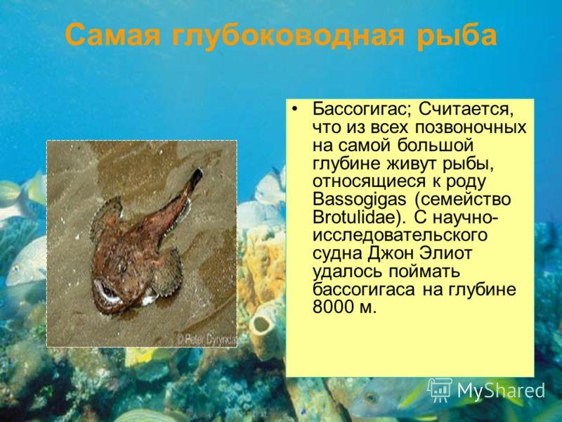 Самая глубоководная рыба Бассогигас; Считается, что из всех позвоночных на самой большой глубине живут рыбы, относящиеся к роду Bassogigas (семейство Brotulidae). С научно- исследовательского судна Джон Элиот удалось поймать бассогигаса на глубине 80