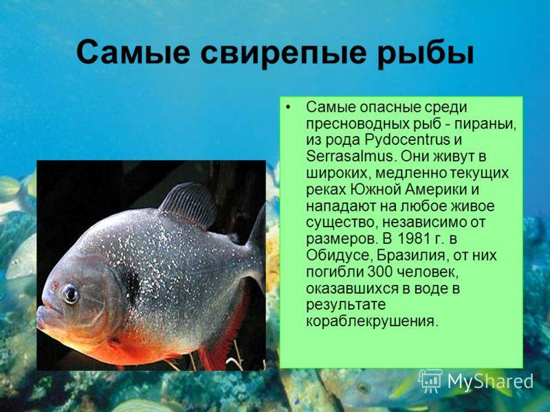 Самые свирепые рыбы Самые опасные среди пресноводных рыб - пираньи, из рода Pydocentrus и Serrasalmus. Они живут в широких, медленно текущих реках Южной Америки и нападают на любое живое существо, независимо от размеров. В 1981 г. в Обидусе, Бразилия