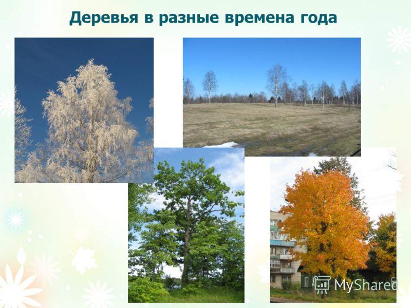 Деревья в разные времена года
