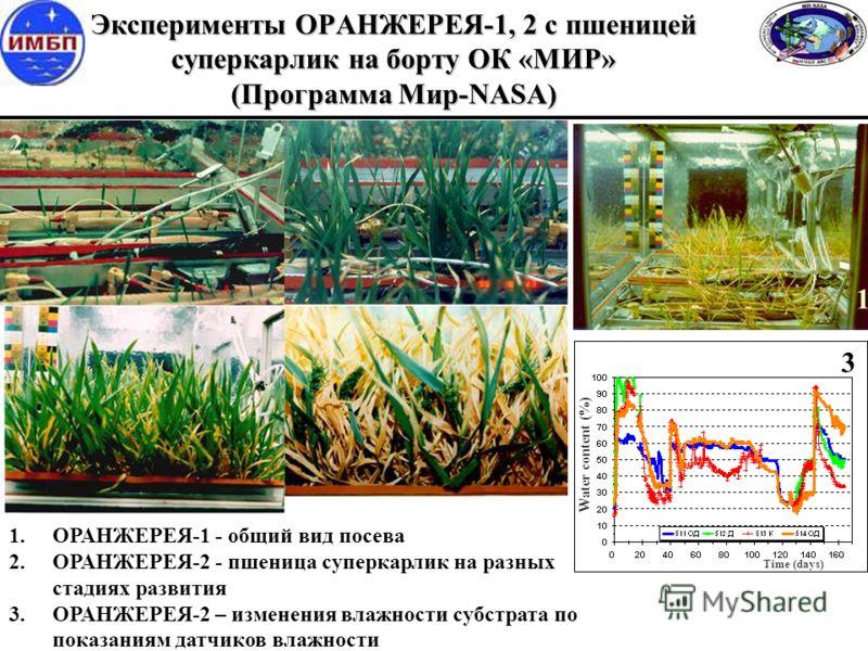 Эксперименты ОРАНЖЕРЕЯ-1, 2 с пшеницей суперкарлик на борту ОК «МИР» (Программа Мир-NASA) 1.ОРАНЖЕРЕЯ-1 - общий вид посева 2.ОРАНЖЕРЕЯ-2 - пшеница суперкарлик на разных стадиях развития 3.ОРАНЖЕРЕЯ-2 – изменения влажности субстрата по показаниям датч