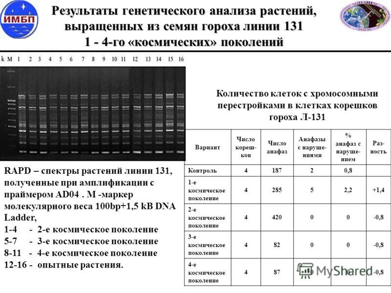 Вариант Число кореш- ков Число анафаз Анафазы с наруше- ниями % анафаз с наруше- нием Раз- ность Контроль418720,8 1-е космическое поколение 428552,2+1,4 2-е космическое поколение 442000-0,8 3-е космическое поколение 48200-0,8 4-е космическое поколени