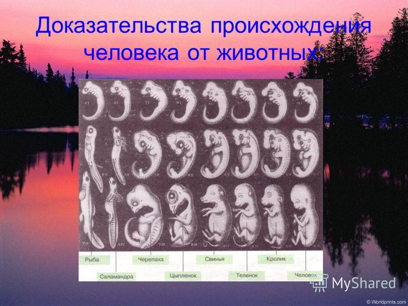 Доказательства происхождения человека от животных: Физиологические Принципиальное сходство процессов протекающих в организмах человека и животных. Эмбриологические Сходные этапы зародышевого развития человека и животных. Палеонтологические Нахождение