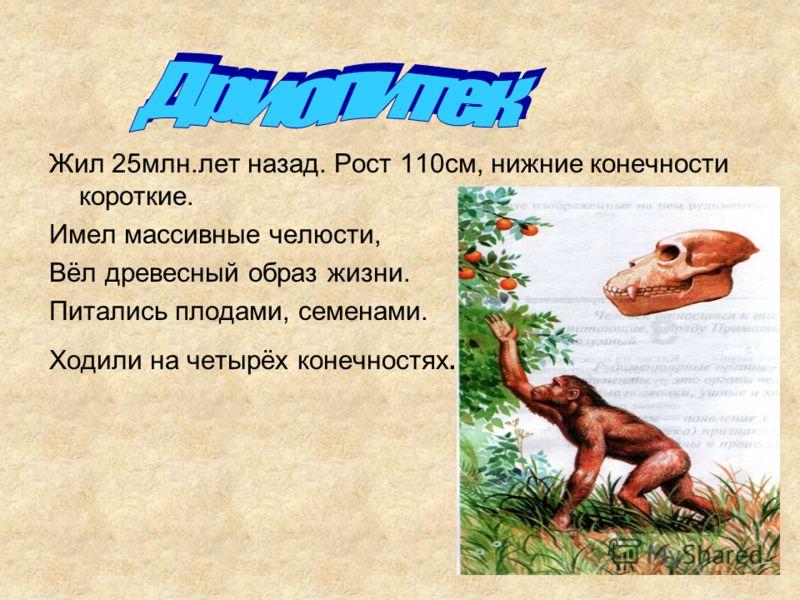 Жил 25млн.лет назад. Рост 110см, нижние конечности короткие. Имел массивные челюсти, Вёл древесный образ жизни. Питались плодами, семенами. Ходили на четырёх конечностях.