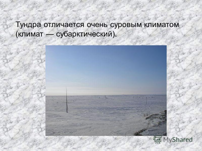 Тундра отличается очень суровым климатом (климат субарктический).
