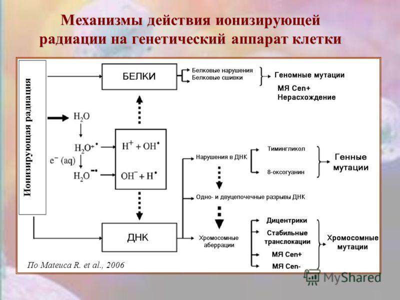 Механизмы действияионизирующей радиации на генетический аппарат клетки Механизмы действия ионизирующей радиации на генетический аппарат клетки По Mateuca R. et al., 2006