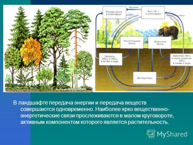 В ландшафте передача энергии и передача веществ совершаются одновременно. Наиболее ярко вещественно- энергетические связи прослеживаются в малом круговороте, активным компонентом которого является растительность.