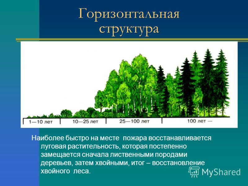 Горизонтальная структура Наиболее быстро на месте пожара восстанавливается луговая растительность, которая постепенно замещается сначала лиственными породами деревьев, затем хвойными, итог – восстановление хвойного леса.