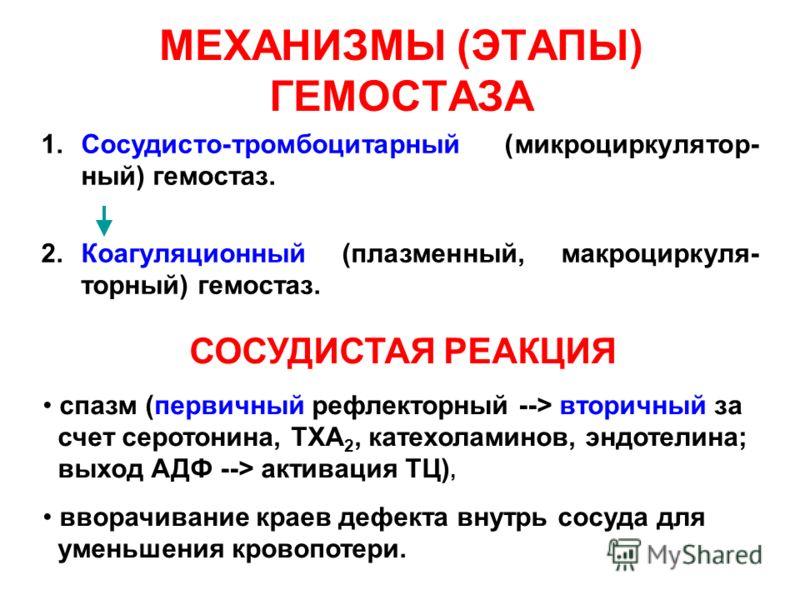 МЕХАНИЗМЫ (ЭТАПЫ) ГЕМОСТАЗА 1.Сосудисто-тромбоцитарный (микроциркулятор- ный) гемостаз. 2.Коагуляционный (плазменный, макроциркуля- торный) гемостаз. СОСУДИСТАЯ РЕАКЦИЯ спазм (первичный рефлекторный --> вторичный за счет серотонина, TXA 2, катехолами
