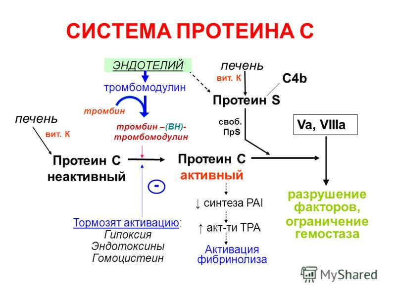 СИСТЕМА ПРОТЕИНА С Протеин С неактивный Va, VIIIa разрушение факторов, ограничение гемостаза Тормозят активацию: Гипоксия Эндотоксины Гомоцистеин - печень Протеин С активный Активация фибринолиза печень C4b Протеин S вит. К тромбин тромбомодулин тром