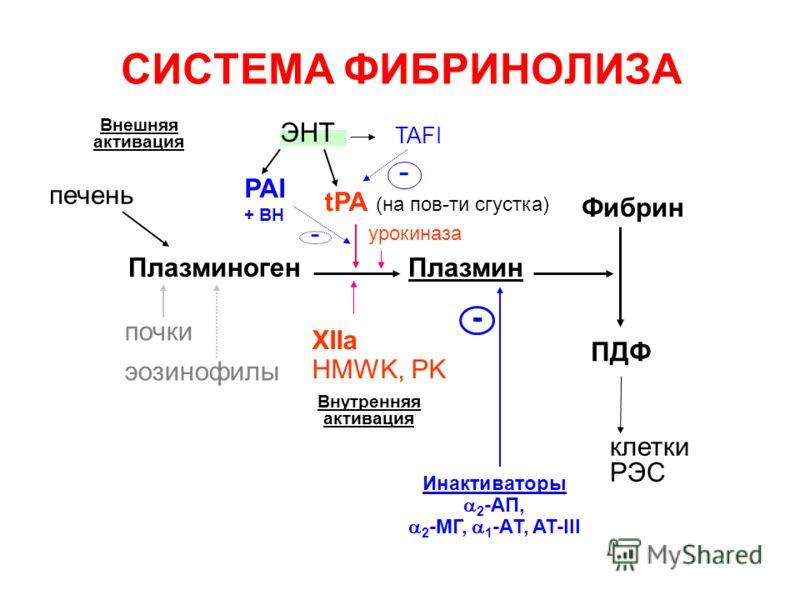 - СИСТЕМА ФИБРИНОЛИЗА Плазминоген tPA (на пов-ти сгустка) XIIa HMWK, PK Внутренняя активация Внешняя активация Плазмин Фибрин ПДФ Инактиваторы 2 -АП, 2 -МГ, 1 -АТ, AT-III - почки печень эозинофилы клетки РЭС PAI + ВН урокиназа ЭНТ - TAFI