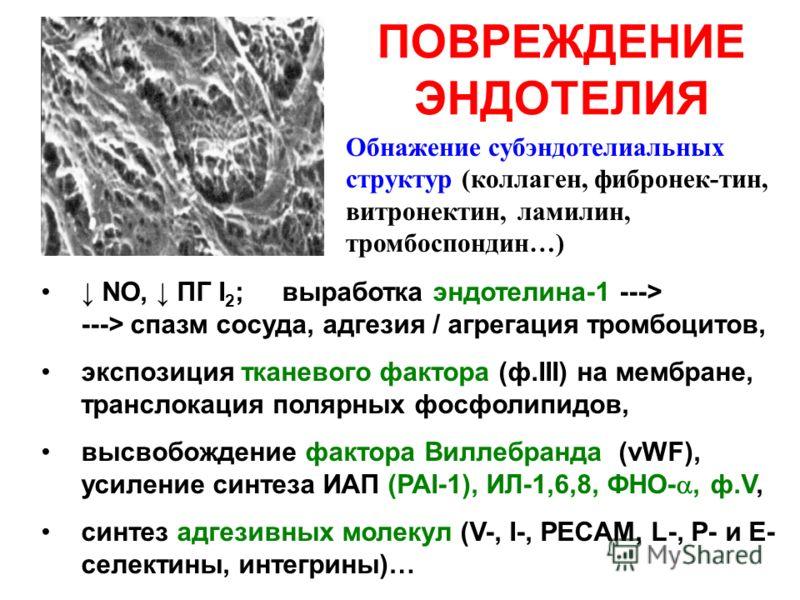 ПОВРЕЖДЕНИЕ ЭНДОТЕЛИЯ NO, ПГ I 2 ; выработка эндотелина-1 ---> ---> спазм сосуда, адгезия / агрегация тромбоцитов, экспозиция тканевого фактора (ф.III) на мембране, транслокация полярных фосфолипидов, высвобождение фактора Виллебранда (vWF), усиление