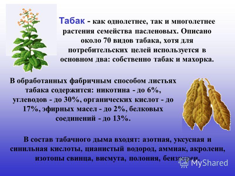 В обработанных фабричным способом листьях табака содержится: никотина - до 6%, углеводов - до 30%, органических кислот - до 17%, эфирных масел - до 2%, белковых соединений - до 13%. Табак - как однолетнее, так и многолетнее растения семейства паслено