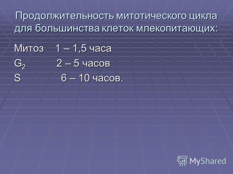 Продолжительность митотического цикла для большинства клеток млекопитающих: Митоз 1 – 1,5 часа G 2 2 – 5 часов S 6 – 10 часов.