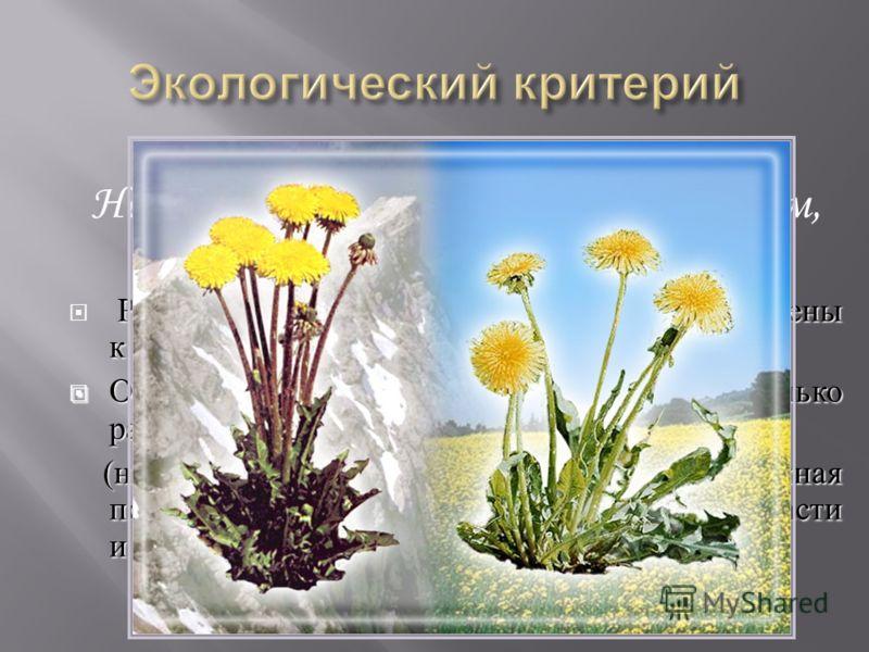 Не является основным и единственным, так как: Разные виды могут быть приспособлены к одинаковым условиям. Особи одного вида могут жить в несколько различающихся условиях Особи одного вида могут жить в несколько различающихся условиях ( например : глу