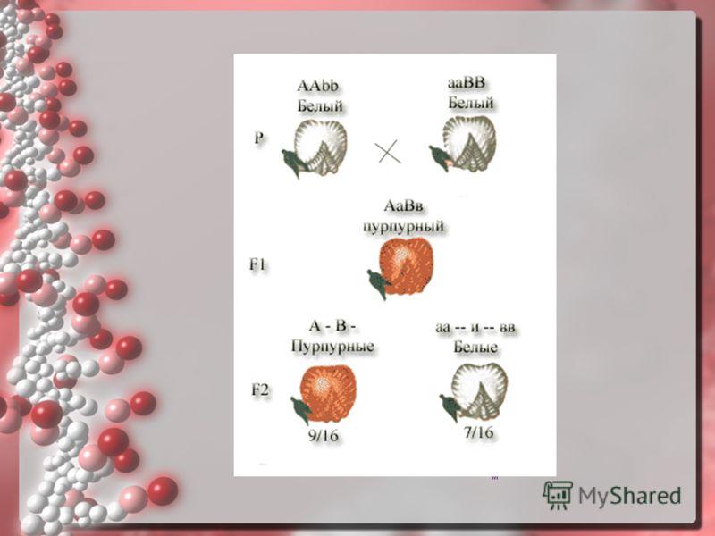 Сцепление на языке хромосомСцепление на языке хромосом