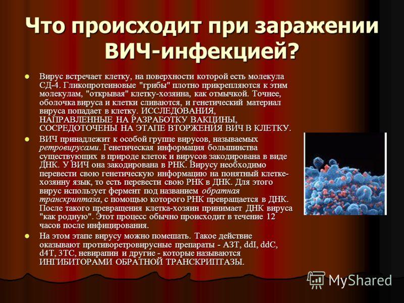 Что происходит при заражении ВИЧ-инфекцией? Вирус встречает клетку, на поверхности которой есть молекула СД-4. Гликопротеиновые
