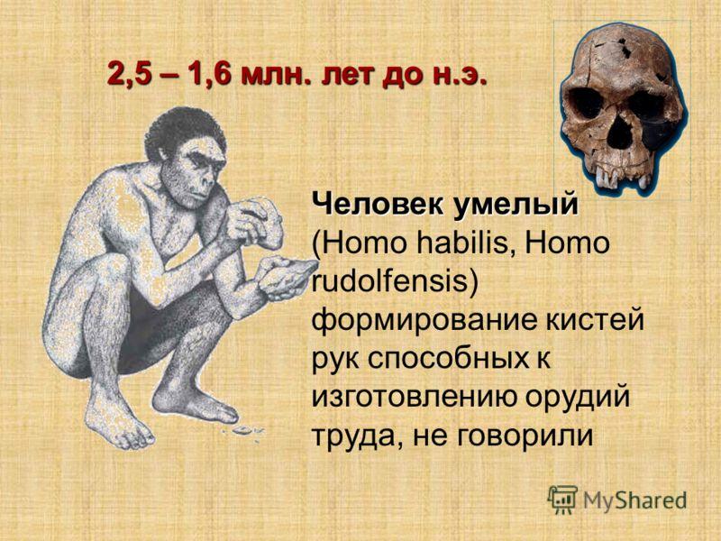 Человек умелый (Homo habilis, Homo rudolfensis) формирование кистей рук способных к изготовлению орудий труда, не говорили 2,5 – 1,6 млн. лет до н.э.
