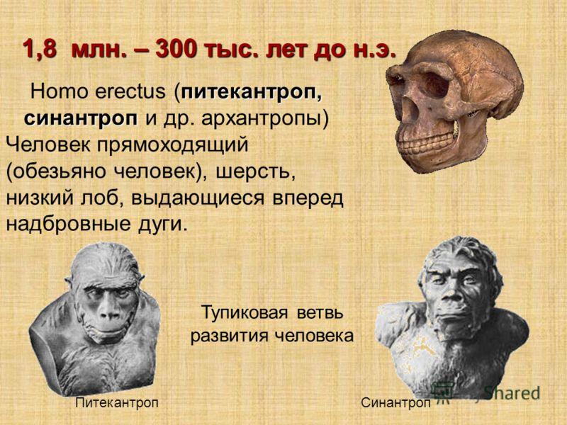 питекантроп, синантроп Homo erectus (питекантроп, синантроп и др. архантропы) Человек прямоходящий (обезьяно человек), шерсть, низкий лоб, выдающиеся вперед надбровные дуги. 1,8 млн. – 300 тыс. лет до н.э. Тупиковая ветвь развития человека Питекантро