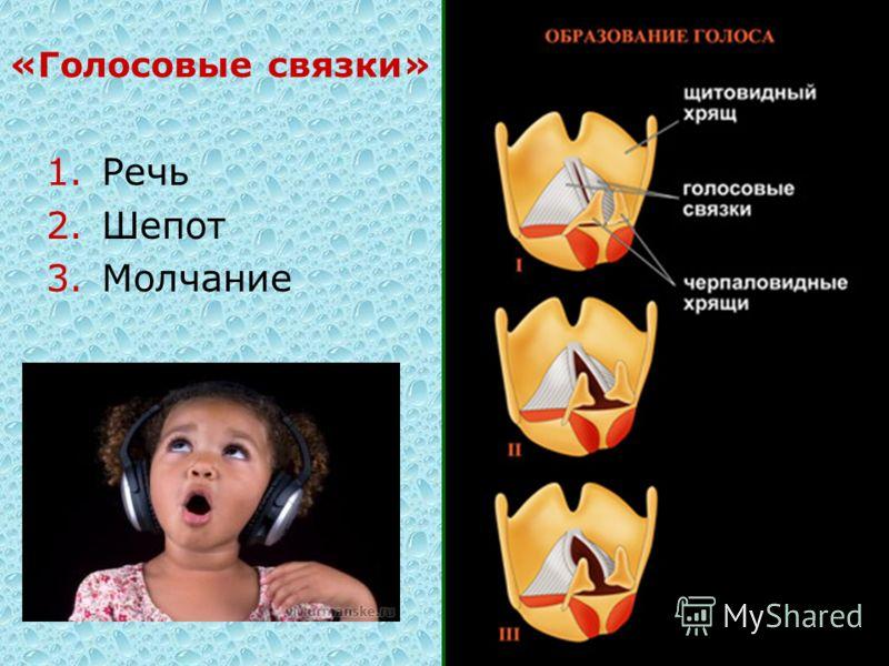 «Голосовые связки» 1.Речь 2.Шепот 3.Молчание