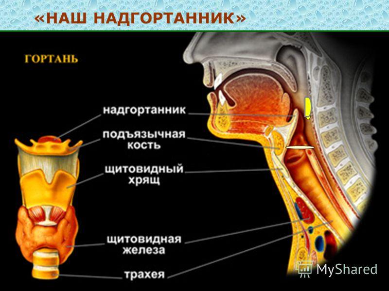 Чем обезболить ребенку боли в коленях