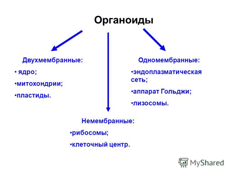 Органоиды Одномембранные: эндоплазматическая сеть; аппарат Гольджи; лизосомы. Двухмембранные: ядро; митохондрии; пластиды. Немембранные: рибосомы; клеточный центр.