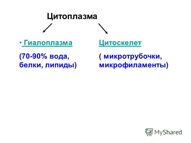 Цитоплазма Цитоскелет ( микротрубочки, микрофиламенты) Гиалоплазма (70-90% вода, белки, липиды)