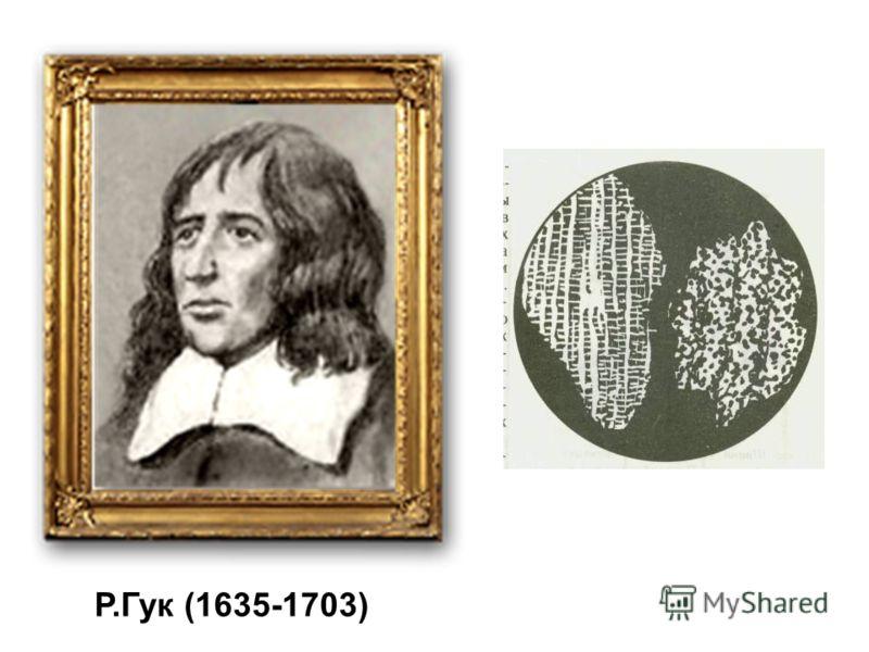 Р.Гук (1635-1703)
