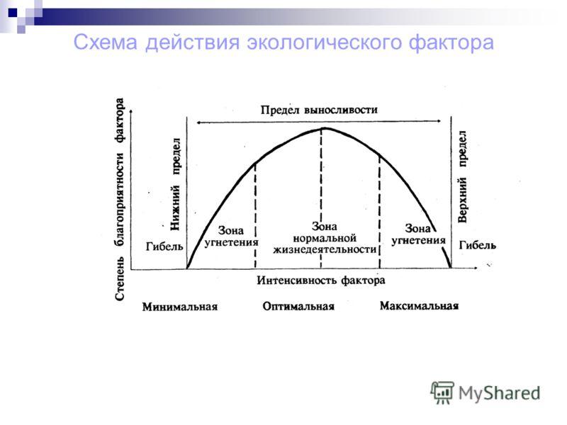 Схема действия экологического фактора
