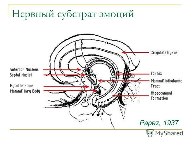Нервный субстрат эмоций Papez, 1937