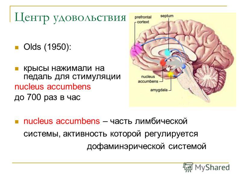 Центр удовольствия Olds (1950): крысы нажимали на педаль для стимуляции nucleus accumbens до 700 раз в час nucleus accumbens – часть лимбической системы, активность которой регулируется дофаминэрической системой