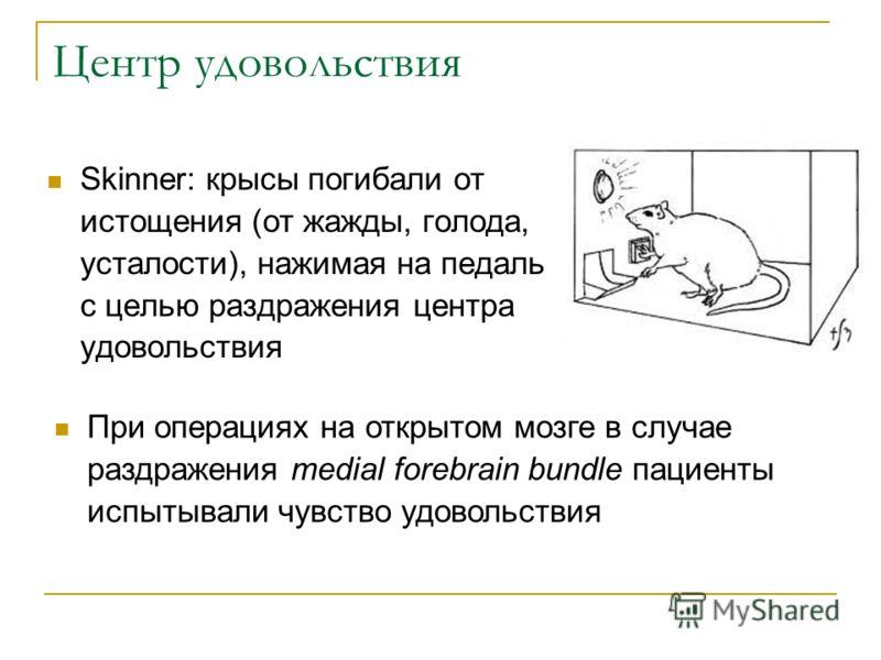 Центр удовольствия Skinner: крысы погибали от истощения (от жажды, голода, усталости), нажимая на педаль с целью раздражения центра удовольствия При операциях на открытом мозге в случае раздражения medial forebrain bundle пациенты испытывали чувство