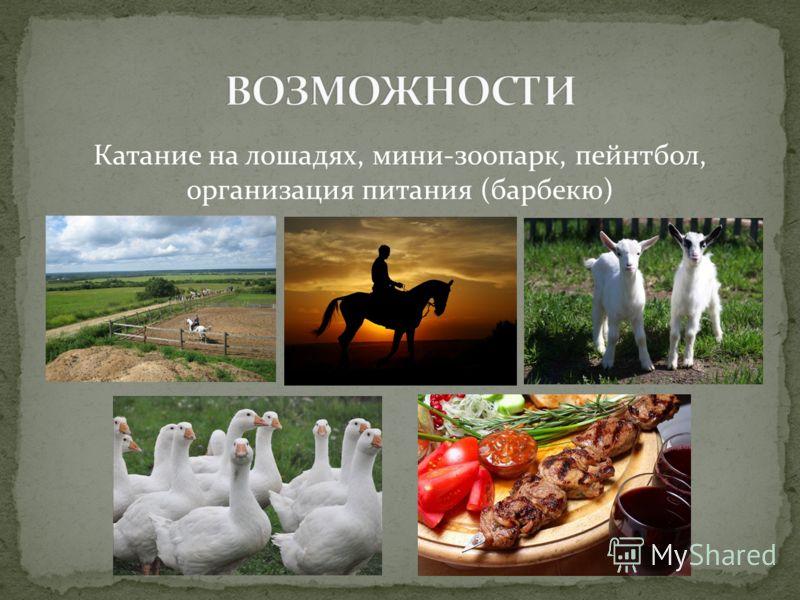 Катание на лошадях, мини-зоопарк, пейнтбол, организация питания (барбекю)