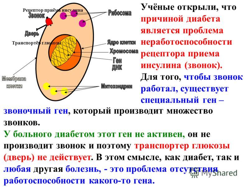 звоночный ген, который производит множество звонков. У больного диабетом этот ген не активен, он не производит звонок и поэтому транспортер глюкозы (дверь) не действует. В этом смысле, как диабет, так и любая другая болезнь, - это проблема отсутствия