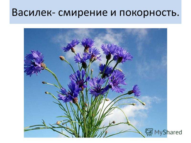 Язык цветов- какие скрытые послания и пожелания несет в себе