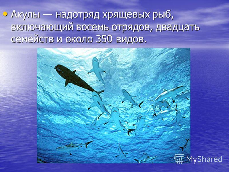 Акулы надотряд хрящевых рыб, включающий восемь отрядов, двадцать семейств и около 350 видов. Акулы надотряд хрящевых рыб, включающий восемь отрядов, двадцать семейств и около 350 видов.