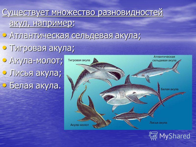 Существует множество разновидностей акул, например: Атлантическая сельдевая акула; Атлантическая сельдевая акула; Тигровая акула; Тигровая акула; Акула-молот; Акула-молот; Лисья акула; Лисья акула; Белая акула. Белая акула.