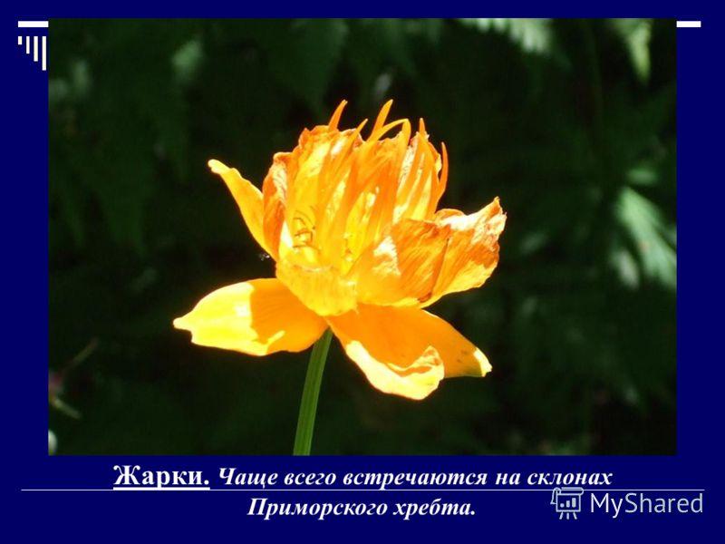 Жарки. Чаще всего встречаются на склонах Приморского хребта.