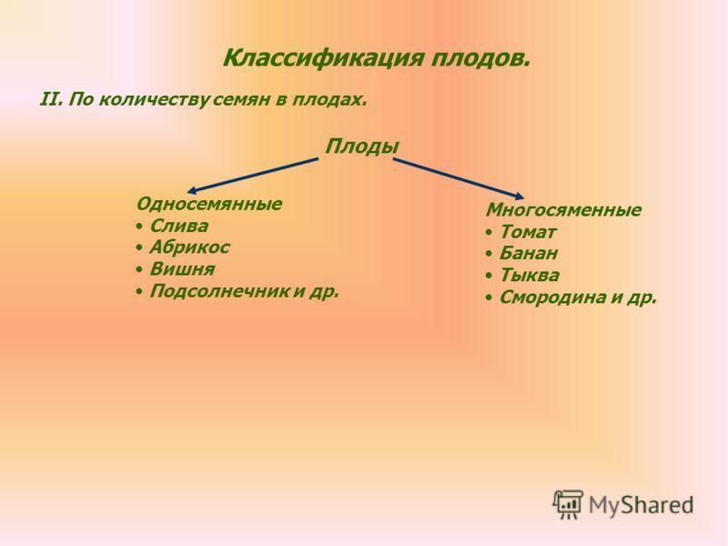 Классификация плодов. II.