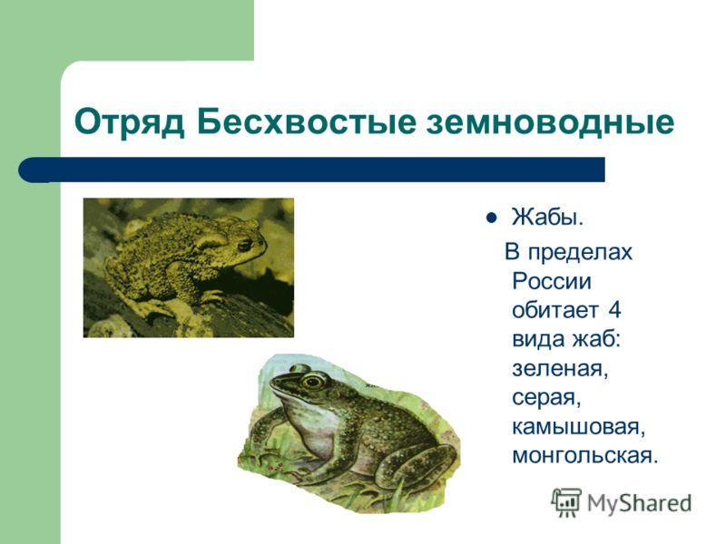 Отряд Бесхвостые земноводные Жабы. В пределах России обитает 4 вида жаб: зеленая, серая, камышовая, монгольская.