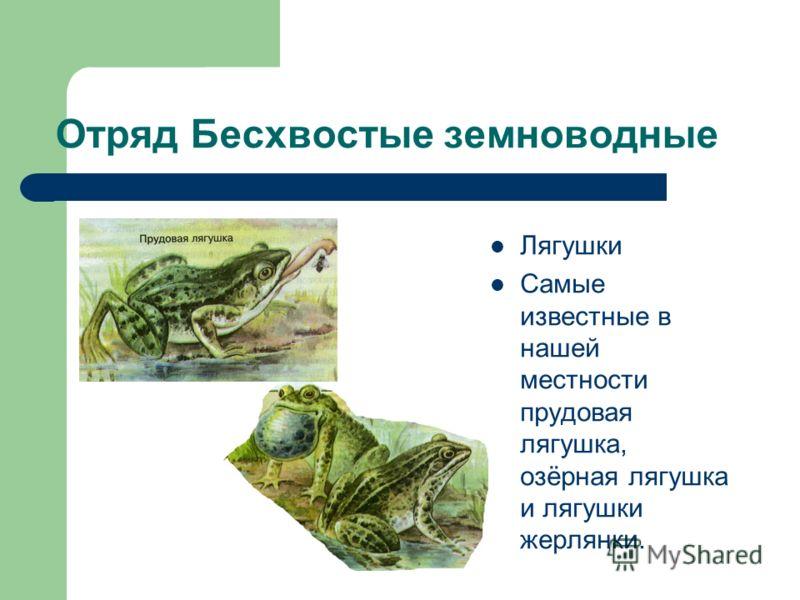 Отряд Бесхвостые земноводные Лягушки Самые известные в нашей местности прудовая лягушка, озёрная лягушка и лягушки жерлянки.