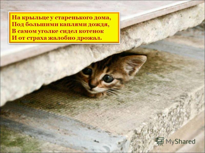 На крыльце у старенького дома, Под большими каплями дождя, В самом уголке сидел котенок И от страха жалобно дрожал.