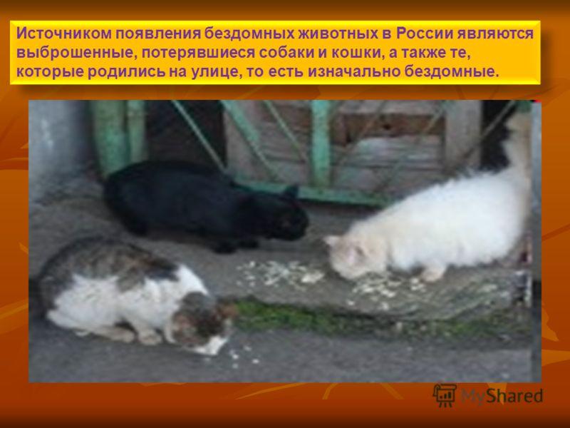 Источником появления бездомных животных в России являются выброшенные, потерявшиеся собаки и кошки, а также те, которые родились на улице, то есть изначально бездомные.