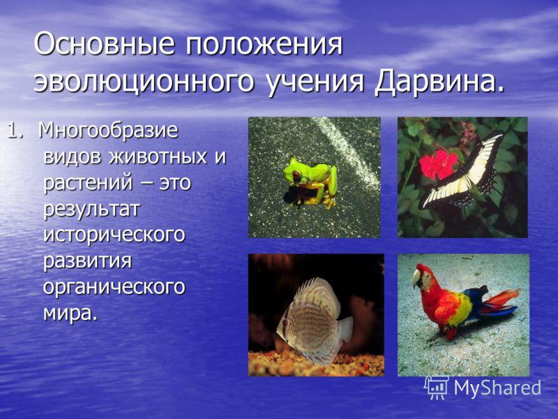 Основные положения эволюционного учения Дарвина. 1. Многообразие видов животных и растений – это результат исторического развития органического мира.