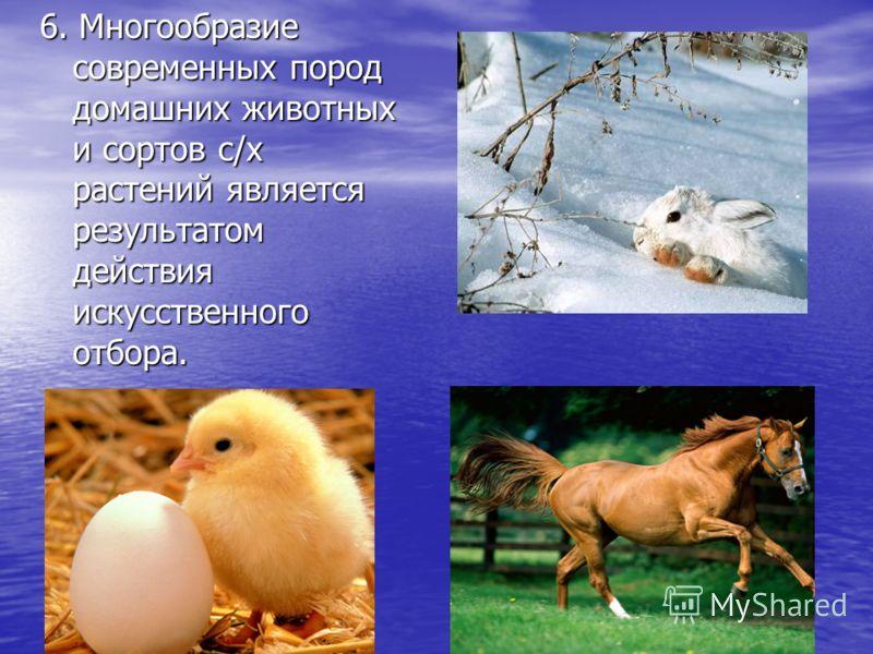 6. Многообразие современных пород домашних животных и сортов с/х растений является результатом действия искусственного отбора.