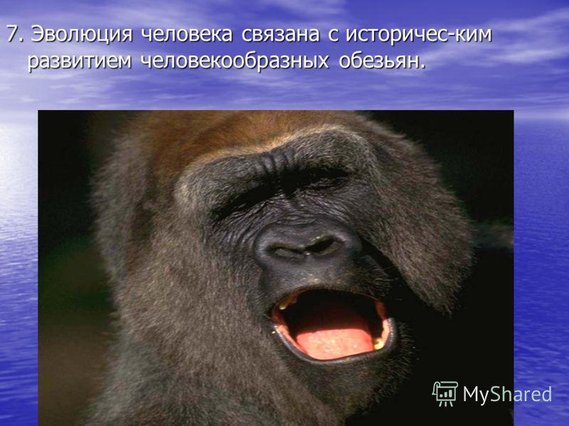 7. Эволюция человека связана с историчес-ким развитием человекообразных обезьян.