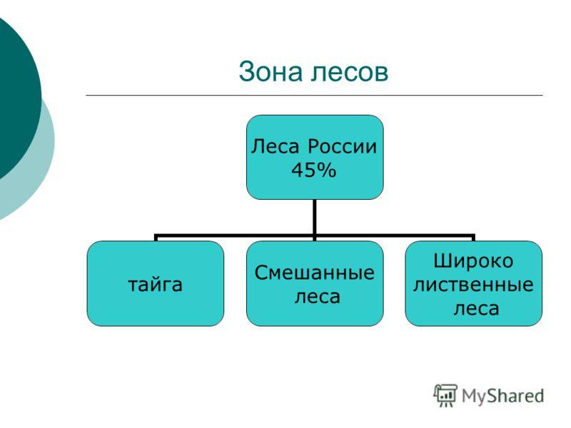 Зона лесов Леса России 45% тайга Смешанные леса Широко лиственные леса