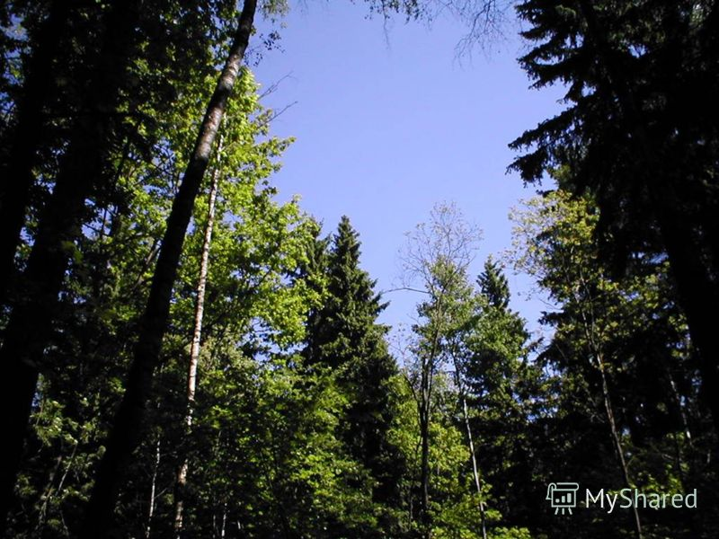 Правила поведения в лесу не оставляй в